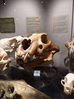 Bones 11